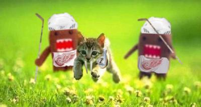 Kitten_Runningwingsvspredscopy.jpg