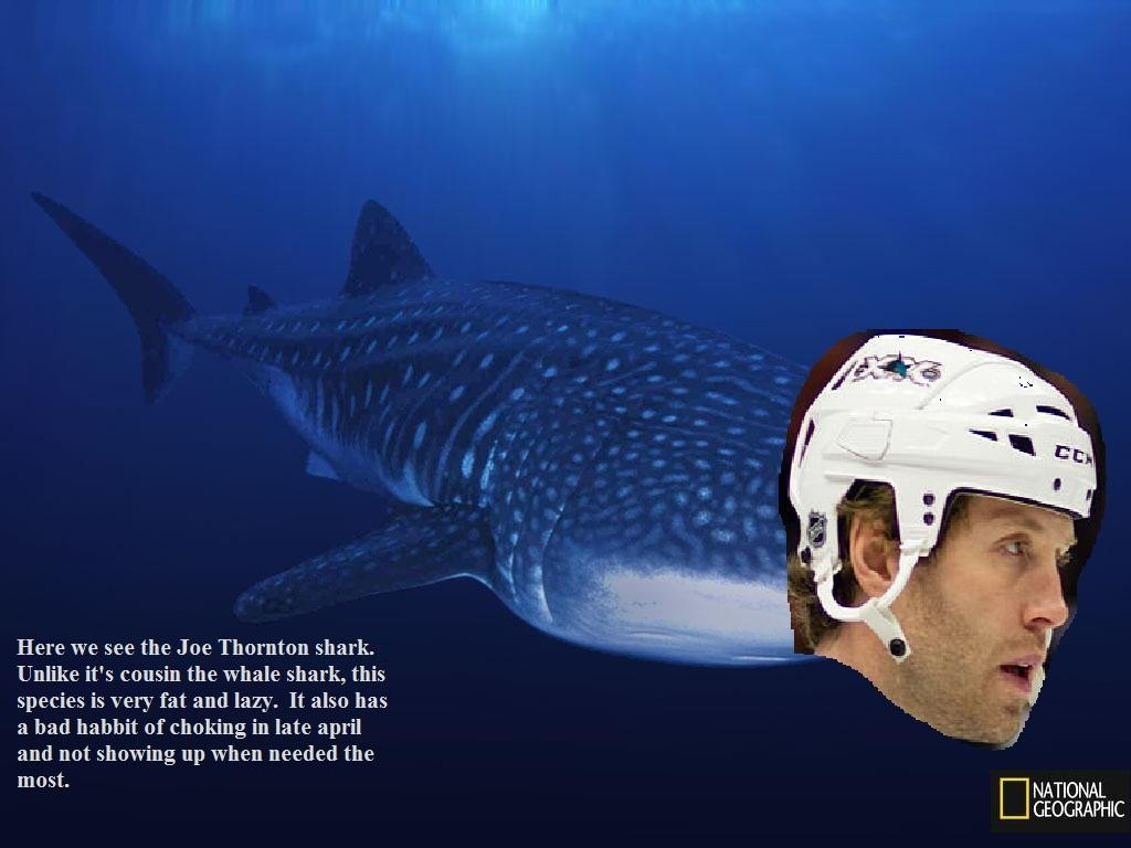 Nat Geo Thornton Shark