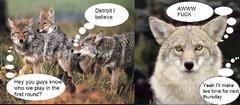 Heartboken Coyote