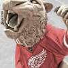 WCSF Game 2 GDT : Red WIngs at Chicago Blackhawks, 1:00 EST - last post by Nevermind